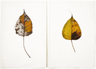 Luisa Sartori In & Out digital print on prepared paper