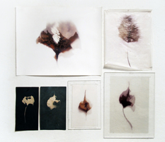 Luisa Sartori In & Out Digital prints on paper and vellum; cyanotypes