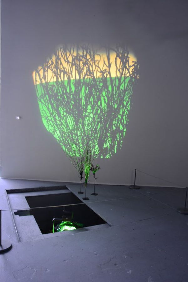 LYDIA GREER  ON THIS SPOT  9 foot cast shadow, native plants, theatrical gels, light.