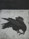 Larger Intaglio Crows intaglio-etching, aquatint, spitbite