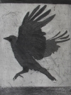 Larger Intaglio Crows intaglio- etching, aquatint, spitbite