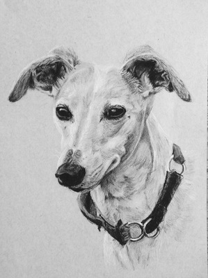Maggie Shafran Pets Charcoal on Paper