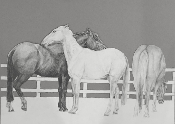 Maggie Shafran Pets Pencil on Paper