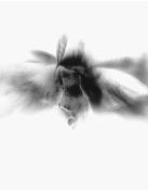 Flight gelatin silver print (luminogram)