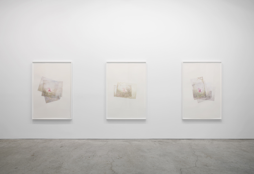 Marc Handelman Focus on Foreground, Foliage, Non-Urban September 2 - October 4, 2014