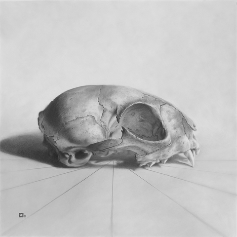 "Marshall K. Harris  ""9"" The Small Skull Series Graphite on Mylar"