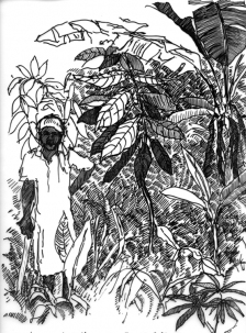 Mary Kelsey Tropics: Drawings Ink on Vellum