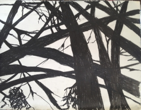 Mary Morant Tree Series Charcoal on paper