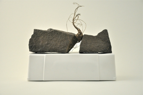 Nancy D. Brown Still, Life Hydrocal, rocks, jicama