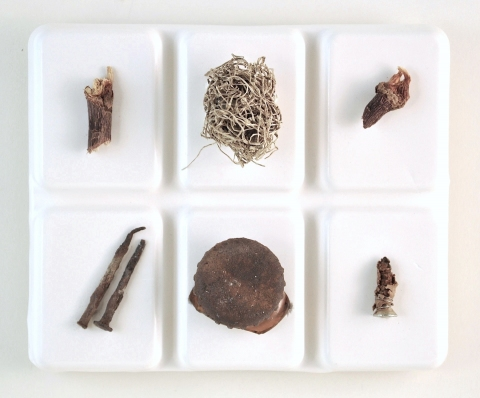 Nancy D. Brown The Order of Things Hydrocal, found objects