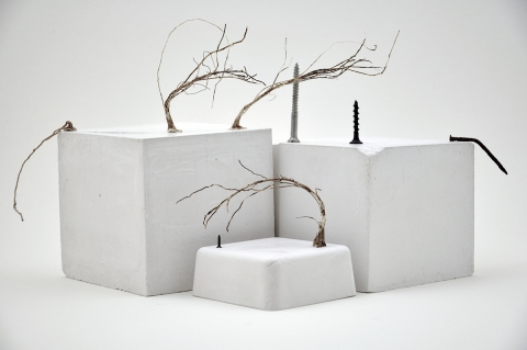 Nancy D. Brown That We Attach  Plaster of Paris, roots, screws