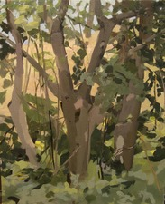 Nancy McCarthy TREE PAINTINGS oil on linen