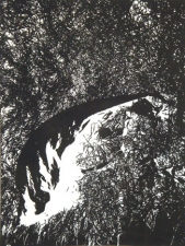 Nancy McTague-Stock  Solar Etchings, Monotypes Solar Etching