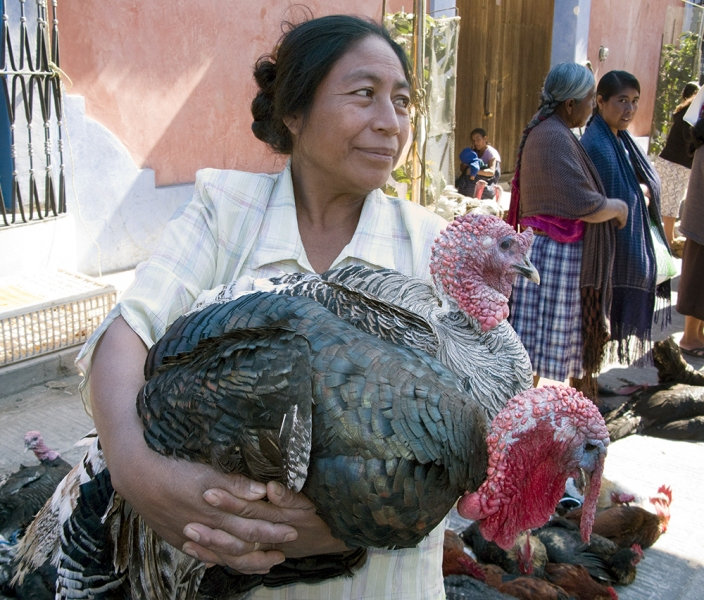 Buyers and Sellers Turkeys, Tlacolula