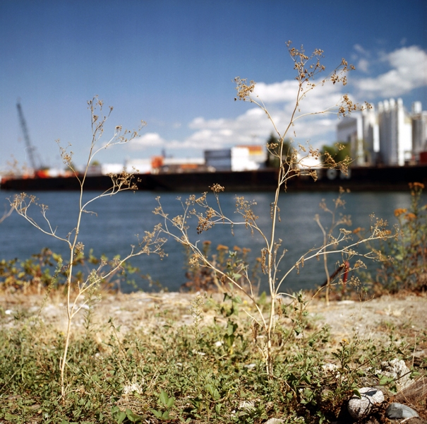 On the Duwamish Weeds Still Standing, Tina's Place