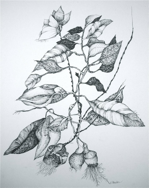 Nancy Reinker Nature's Elements ink