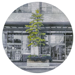 Nicola Woods The Trees Amongst Us  - new tree portraits on radiant metal leaf for sale ink jet print on acetate, mounted on wood round , aluminum leaf