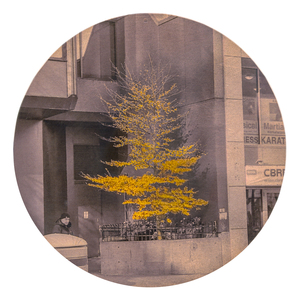 Nicola Woods The Trees Amongst Us  - new tree portraits on radiant metal leaf for sale ink jet print on acetate, mounted on wood round , copper leaf