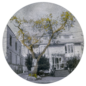 Nicola Woods The Trees Amongst Us  - new tree portraits on radiant metal leaf for sale ink jet print on acetate, mounted on wood round, aluminum Leaf