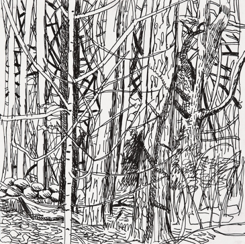 Habitat Drawing Project Ink on paper