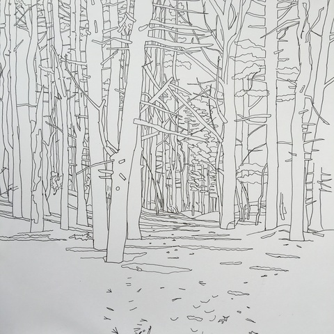 Niels Burger Woods Drawings 2015-2016 ink on paper