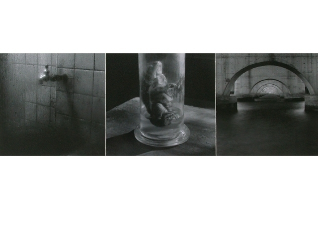 A Frog In The Specimen Room Gelatin Silver Print