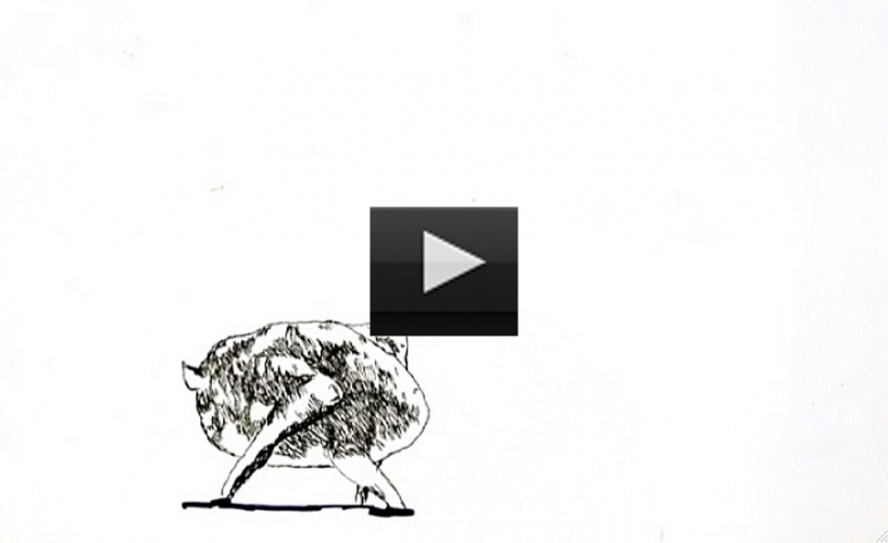 Video  Hand drawn animation