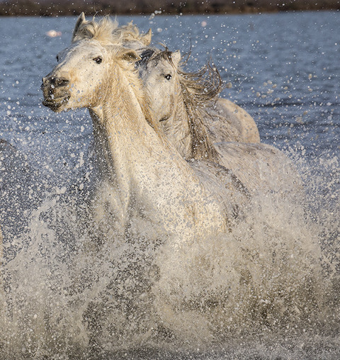 Peggy Braun Horses of the Water Photography
