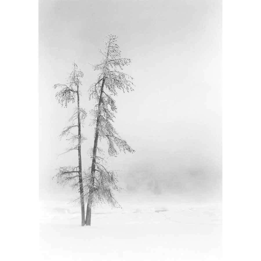 Winter in Yellowstone Twin Trees