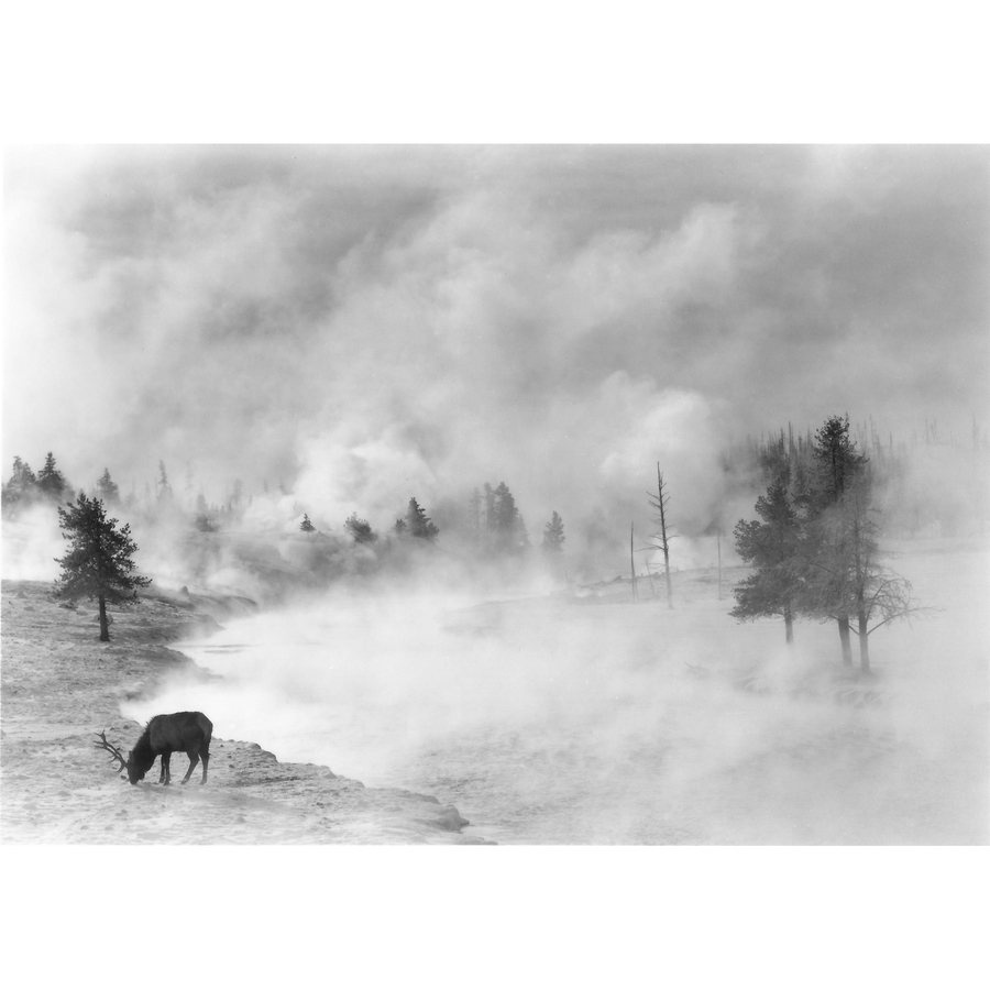 Winter in Yellowstone Elk, Firehole River