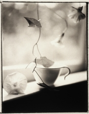Sandy Johanson Polaroid Still Life 1999-2000 Photograph