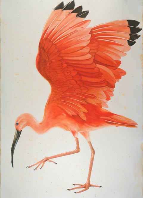 SCOTT KELLEY  BIRDS  Watercolor on paper