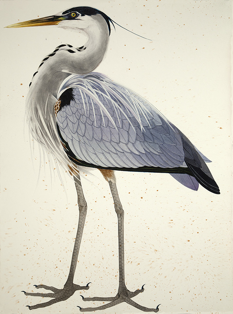 SCOTT KELLEY  BIRDS  Watercolor and gouache on paper