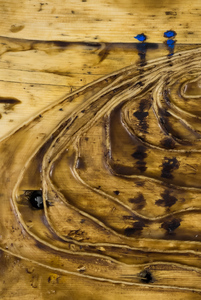Sharon Hogg 2014 Beneath the Long Grass Bitumen and Encaustic on Reclaimed Garage Floorboard