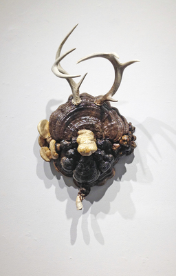 Sideshow Gallery Tracy Heneberger Mushrooms,antlers, epoxy, shellac