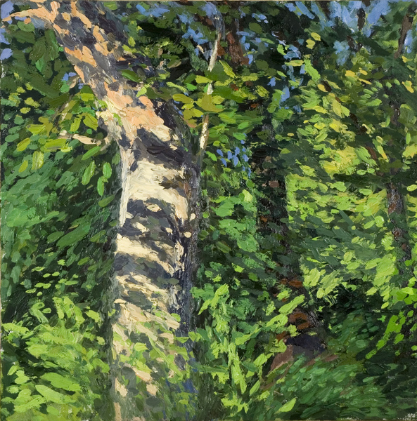 Paintings Birch Tree