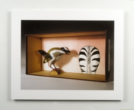 SUE JOHNSON Menagerie Archival pigment print