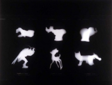 SUE JOHNSON Exhibition at the John Michael Kohler Art Center (2006) Photogram