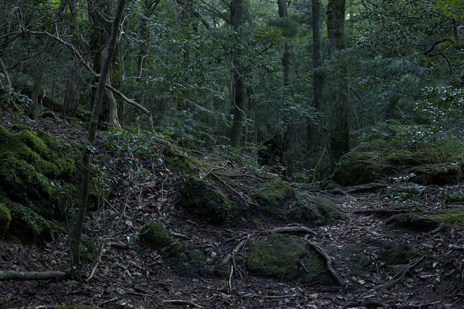 Summer McCorkle Aokigahara Stills