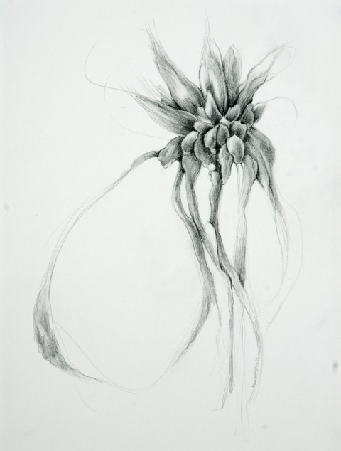Susan Manspeizer Imaginary Botanicals graphite on paper