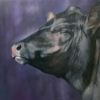 ANIMALS oil/linen