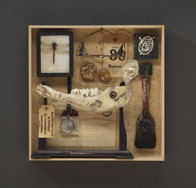 Wendy Aikin Cabinet Of Curiosities ...