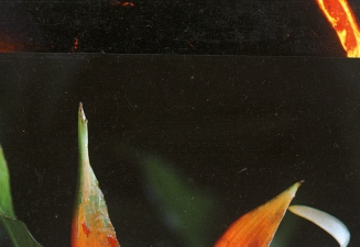 Will Wadlington Floral Series (7 images) Collage on panel