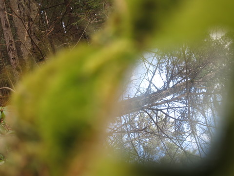 MacDowell Colony Landscape 2018  MacDowell Colony Landscape 2018