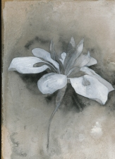 Amie Oliver Botanicals: an ongoing series acrylic and ink on MDF panel