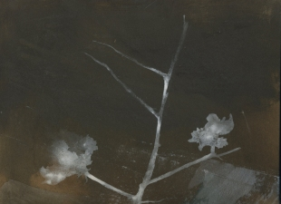 Amie Oliver Botanicals: an ongoing series acrylic on MDF panel