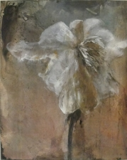Amie Oliver Botanicals charcoal and acrylic on artist panel