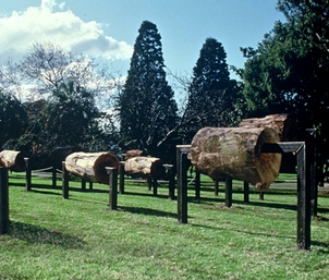 ECHO OF FARADAY WOOD, Royal Botanical Gardens, Sydney, Australia, 1997 (Commissioned by Art Gallery of New South Wales)
