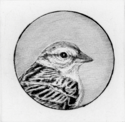 Anita S. Hunt   Birds and Bugs drypoint
