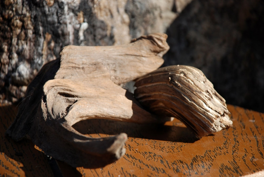 2009 Detail of Untitled (Mushroom Tree): Wood Shelf II
